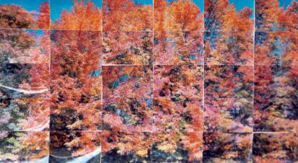 Alan Sonfist is 'n kunstenaar van die huidige landkuns