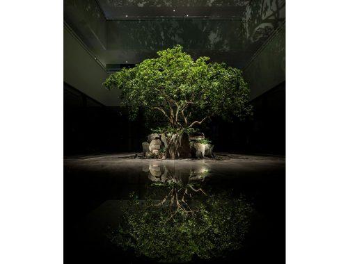 Trær midt i et mørkt rom.