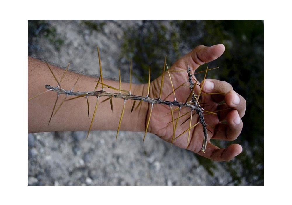 Hånd som holder en pinne med torner.