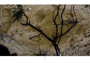Αεροφωτογραφία ενός κλάδου δέντρου σε ξηρή επιφάνεια.