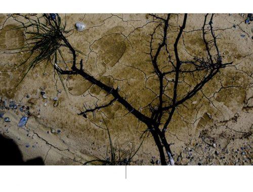 शुष्क भूमि की सतह पर एक पेड़ की शाखा का हवाई शॉट।