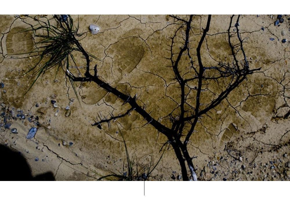 لقطة جوية لفرع شجرة على سطح اليابسة.