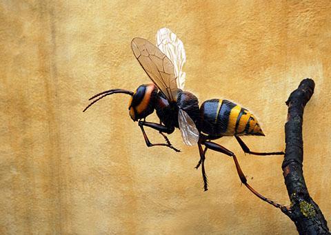 nærbilde av bi