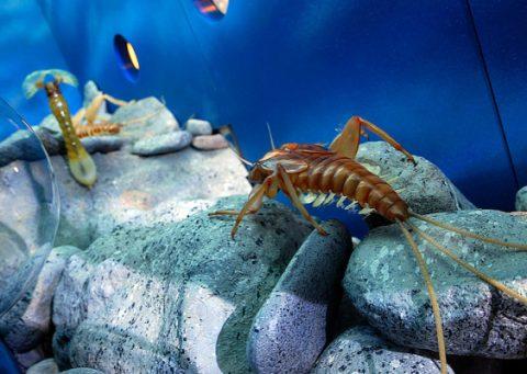 insekter i sjøen
