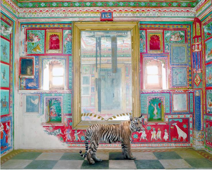 Φωτογραφία τίγρης στη ζούγκλα