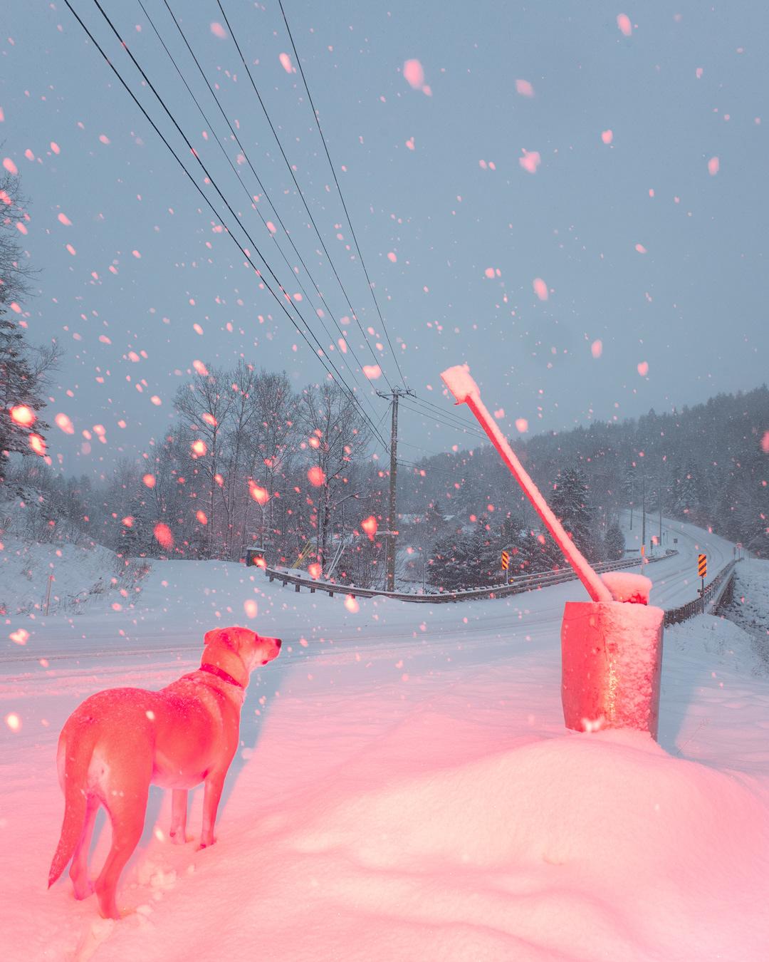 बर्फ में कुत्ता