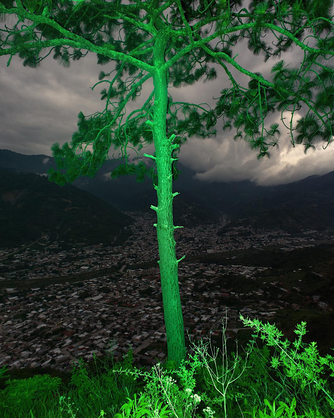 फ्लोरोसेंट पेड़