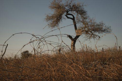रेगिस्तान और कंटीले तार