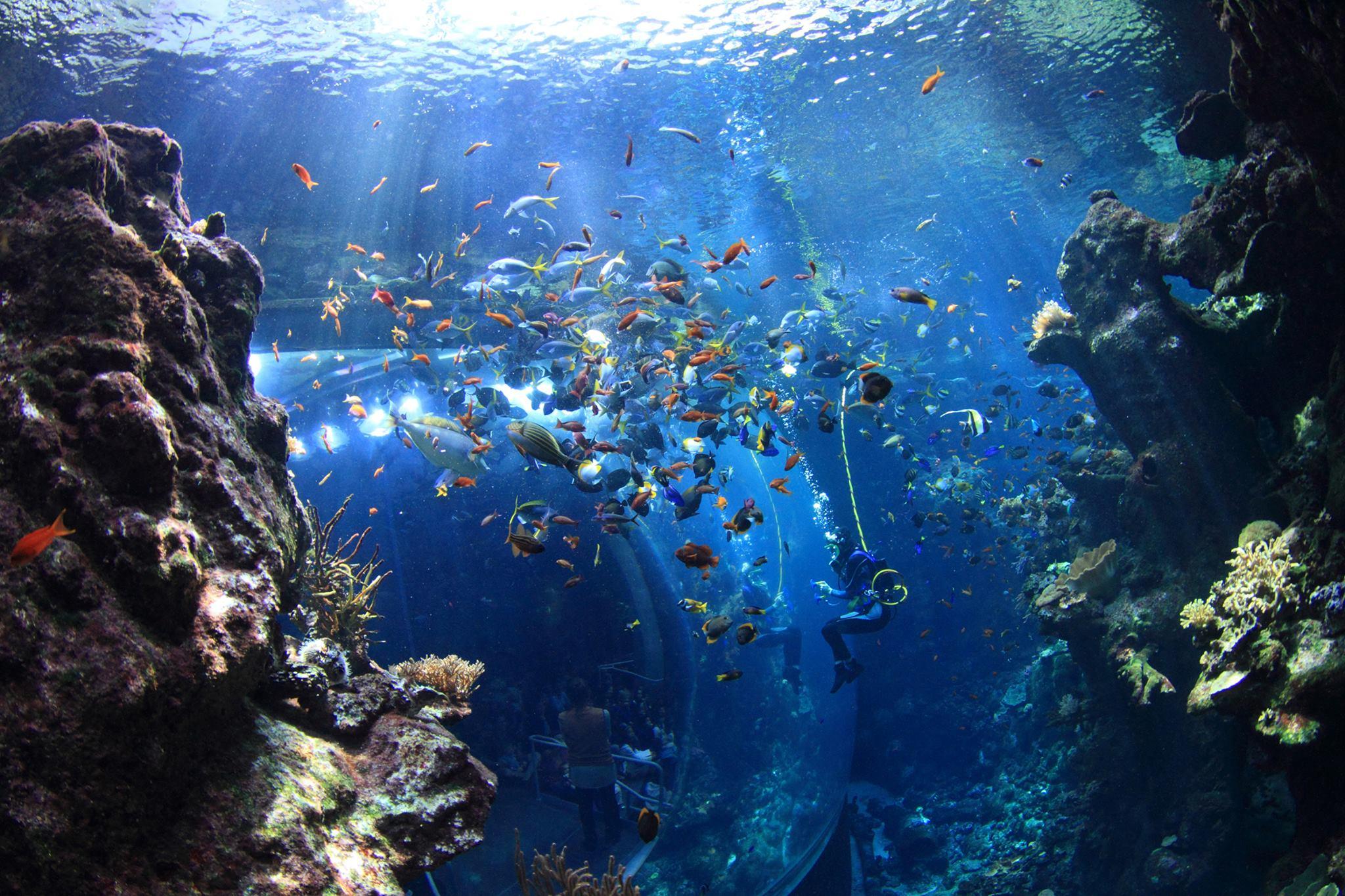 El acuario de la Academia de Ciencias de California