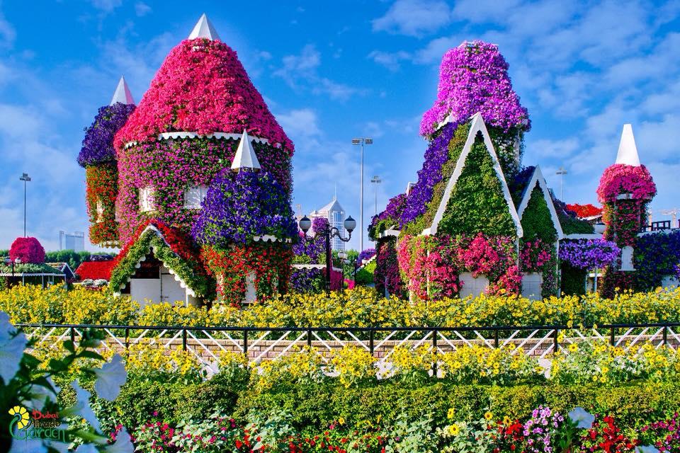 Οι πολύχρωμοι κήποι του Dubai Miracle Garden