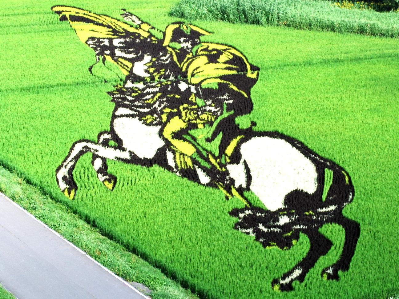 Napoleon φτιαγμένο με λουλούδια ρύζι