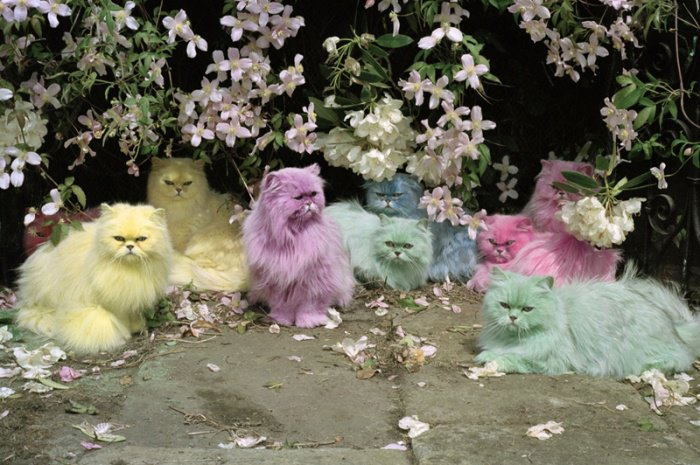 Pastel Cats de Tim Walker