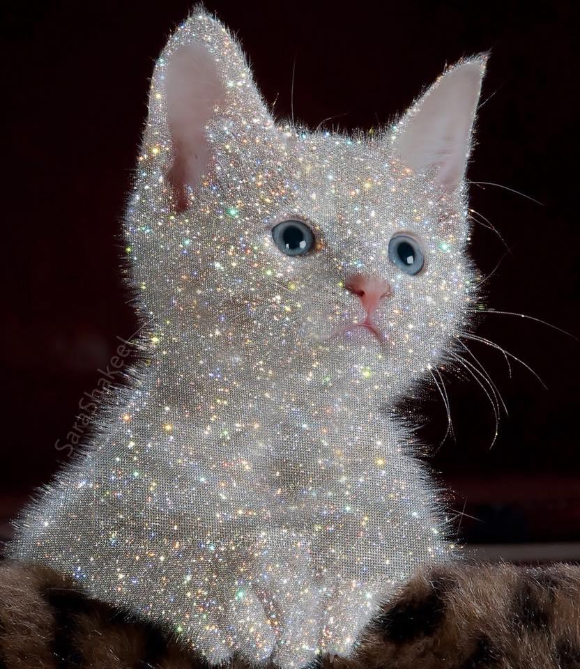 Λαμπερό γατάκι από την Sara Shakeel