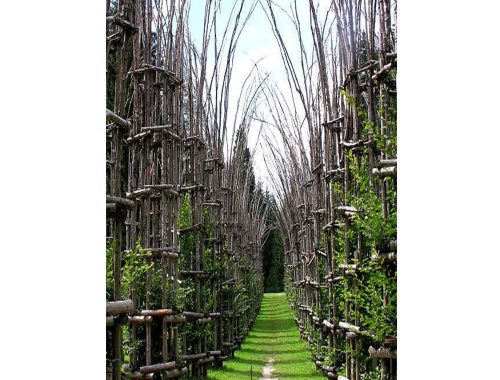 Catedral Vegetal