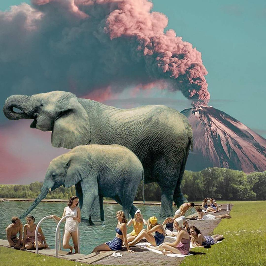 लेक्सा हाथी। फोटो: Laziestlady