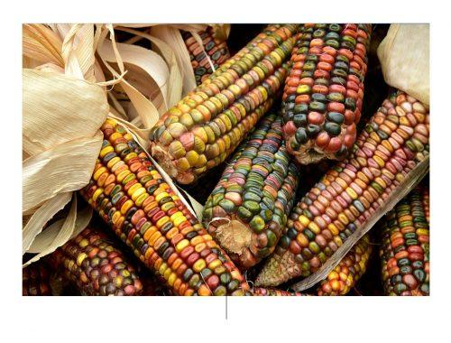 Gastronomía e independencia. Foto de: pixabay.com