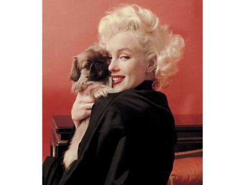 Γυναίκες και σκύλοι Φωτογραφία: