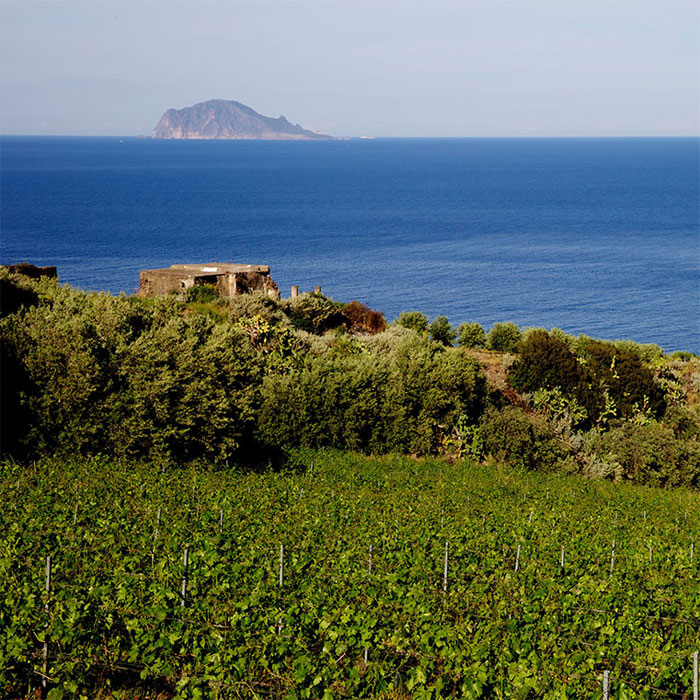 Viñedos en Villagrande, Sicilia