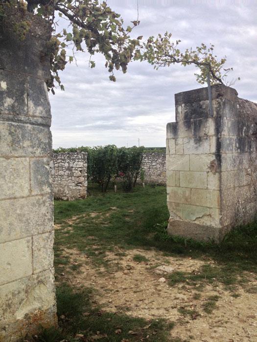 Viñedos de Clos D'Entre les Murs, Francia